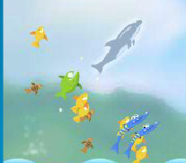 Play Dolphin Cup